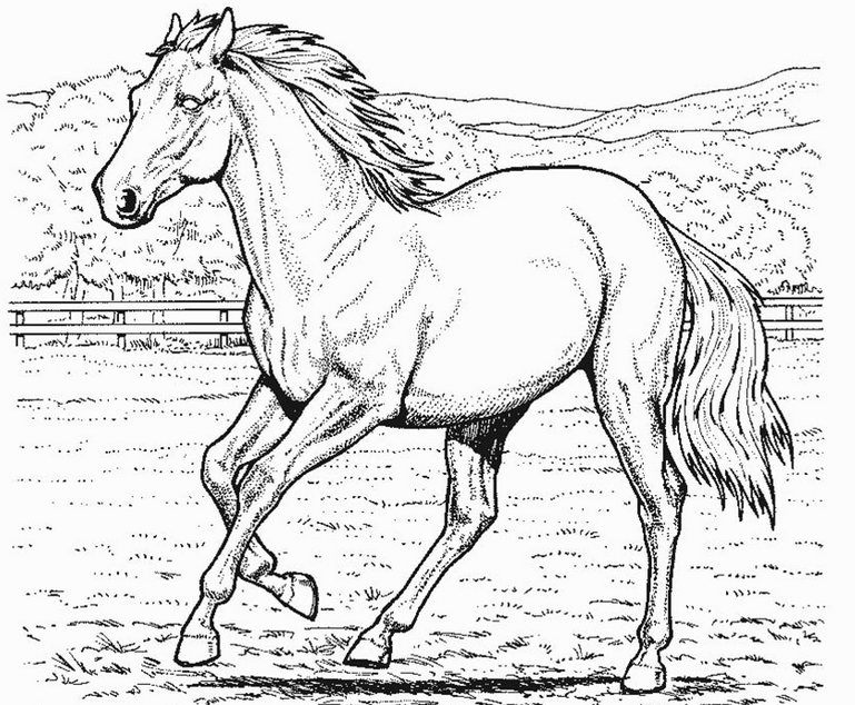 cool horse coloring pages cool horse coloring pages cool coloring horse pages