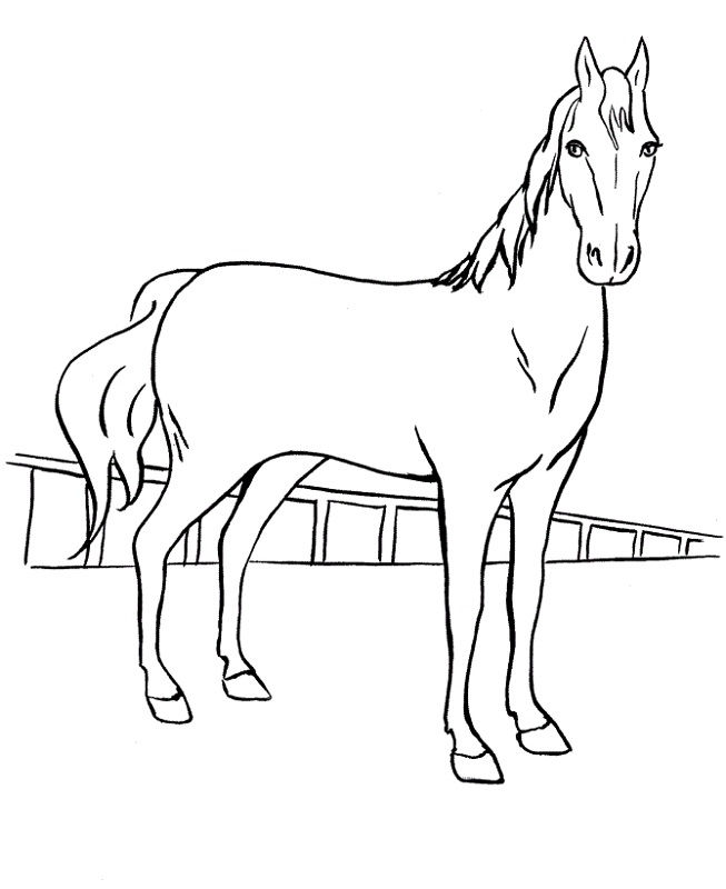 cool horse coloring pages cool horse coloring pages printable horse coloring pages horse cool coloring pages