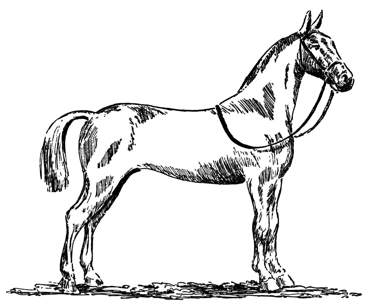 cool horse coloring pages horse bridle drawing at getdrawings free download cool coloring pages horse