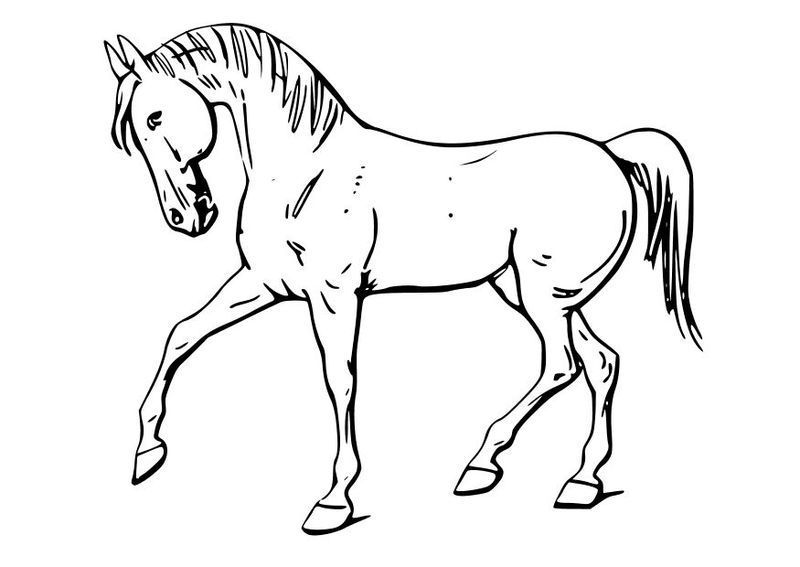 cool horse coloring pages horse coloring pages 2021 best cool funny horse coloring pages cool