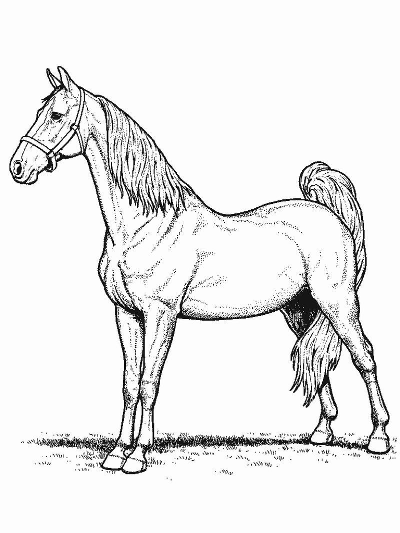cool horse coloring pages horse coloring pages 2021 best cool funny horse cool pages coloring