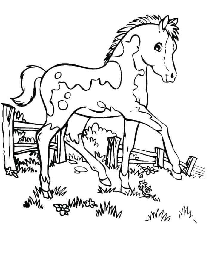 cool horse coloring pages horse coloring pages and printables coloring pages cool horse