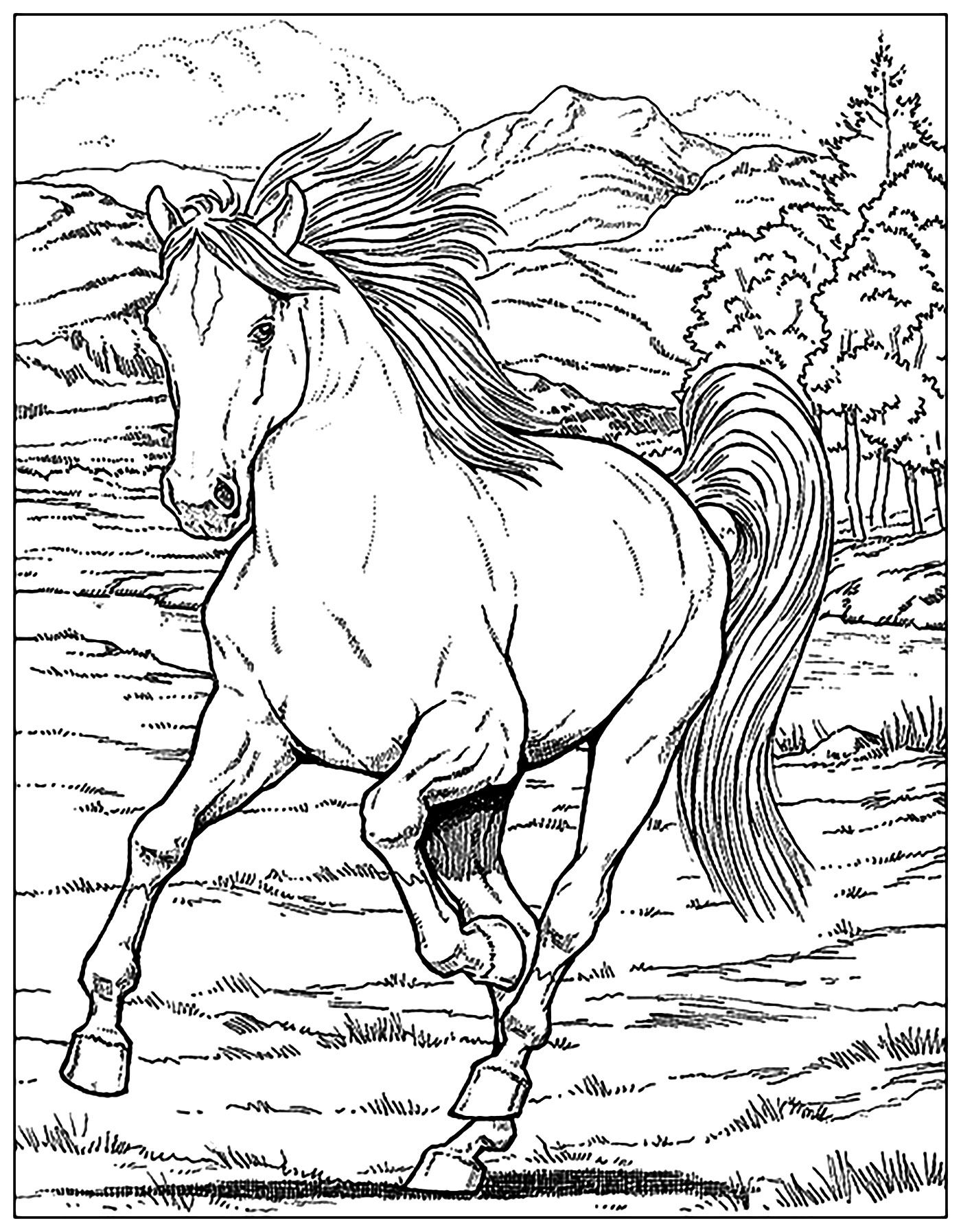 cool horse coloring pages horse coloring pages free download on clipartmag coloring cool pages horse