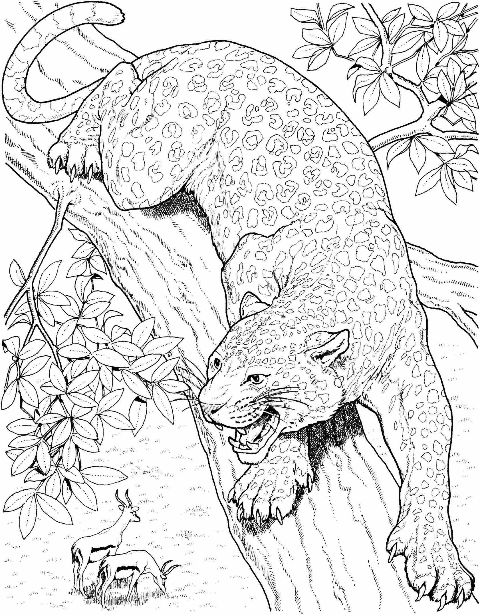 hard cute cat coloring pages 18 printable cat coloring pages cat kittens print pages cute cat coloring hard