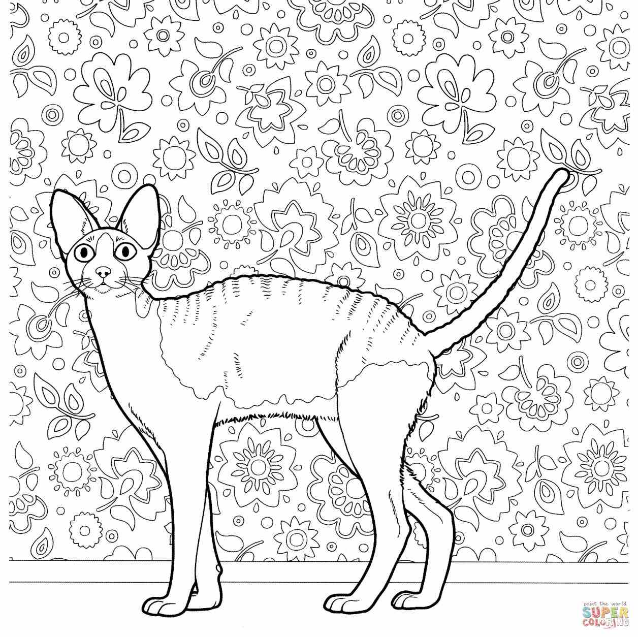 hard cute cat coloring pages cat coloring pages coloringrocks coloring hard cat pages cute