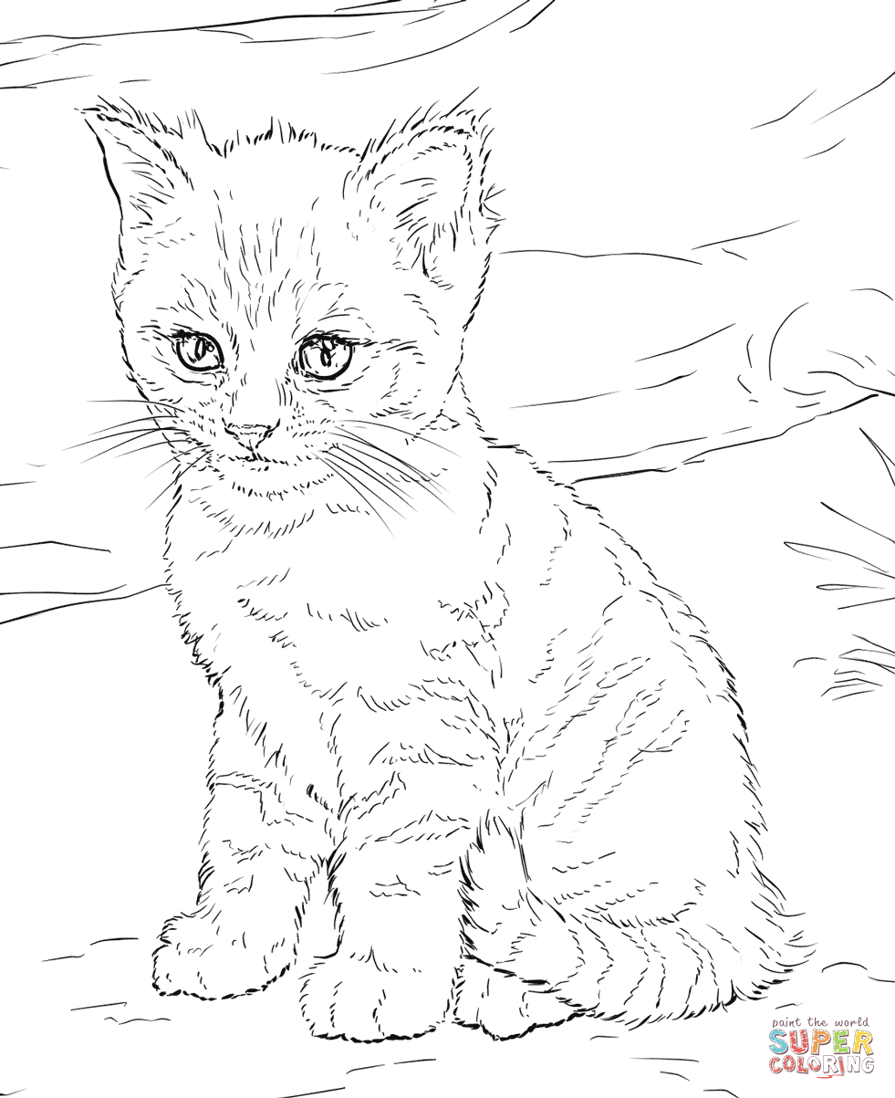 Hard cute cat coloring pages