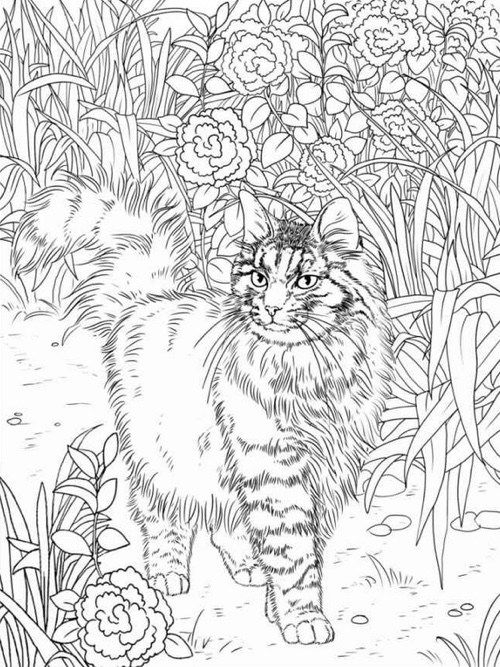 hard cute cat coloring pages cats coloring pages printable hard cat pages coloring cute