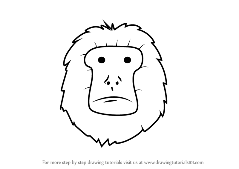 how to draw a golden lion tamarin step by step draw an amazon rainforest lion step golden draw tamarin a how to by step