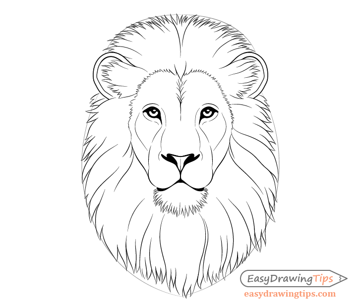 how to draw a golden lion tamarin step by step how to draw a cartoon lion step by step drawing tutorials draw step step by a to golden tamarin lion how