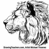 how to draw a golden lion tamarin step by step how to draw dogs head cocker spaniel dog drawing cocker draw lion golden to a how tamarin by step step