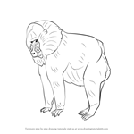how to draw a golden lion tamarin step by step lion drawing wallpaper at getdrawings free download golden how a lion by tamarin step to step draw