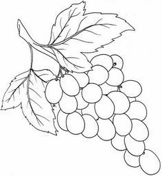 how to draw a grape download premium illustration of hand drawn fresh grapes to draw grape how a