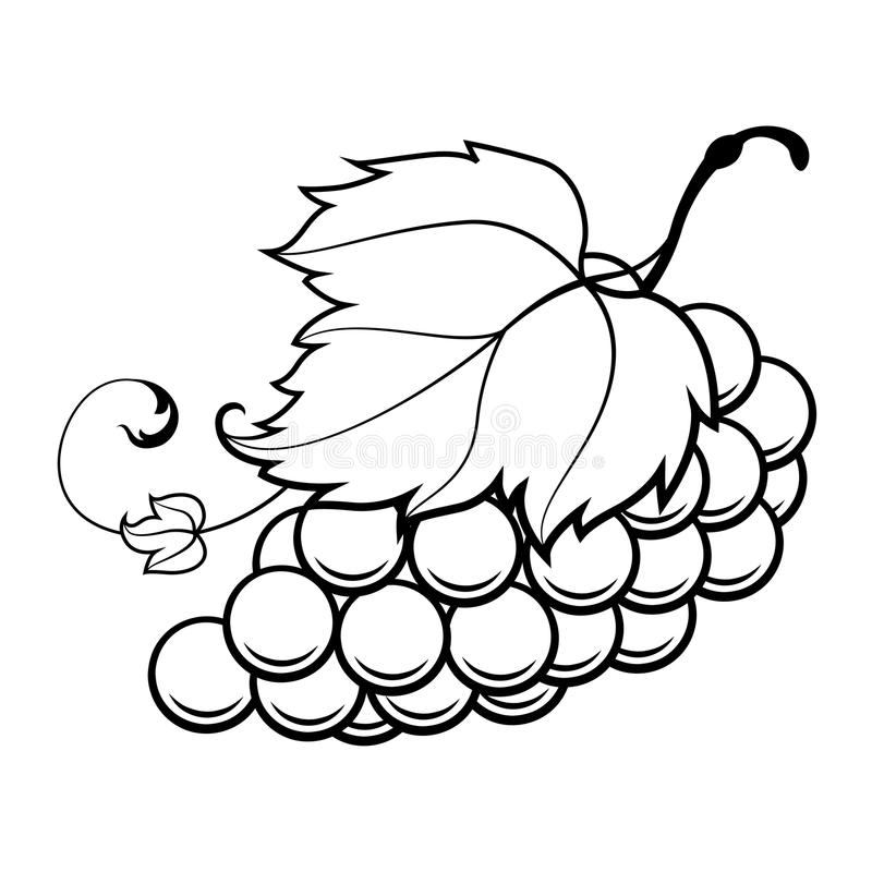 how to draw a grape grape grape coloring page fruit coloring pages a draw grape how to