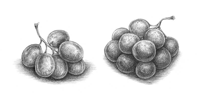 how to draw a grape grape leaves drawing at getdrawings free download to grape a how draw