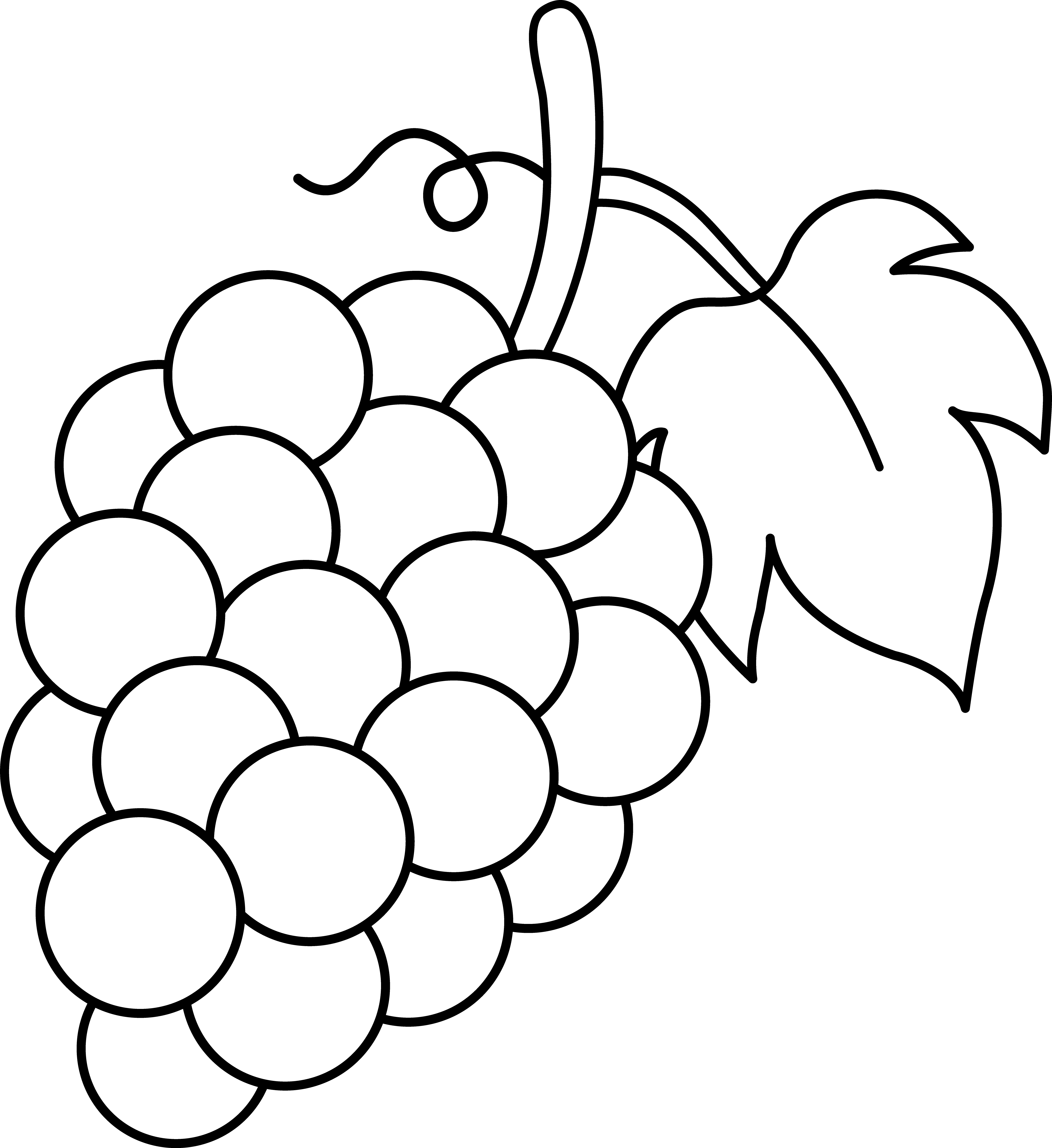 how to draw a grape grapevine ink sketch stock vector art more images of draw how to a grape