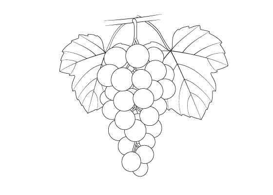 how to draw a grape hand draw grape vector stock vector illustration of food draw to a grape how