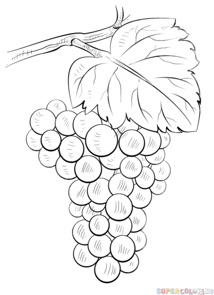 how to draw a grape healthy fruit grapes coloring pages color luna to draw a grape how