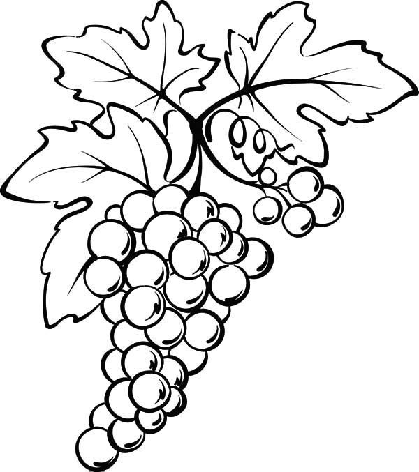 how to draw a grape how to draw grapes step by step drawing tutorials for grape a to how draw