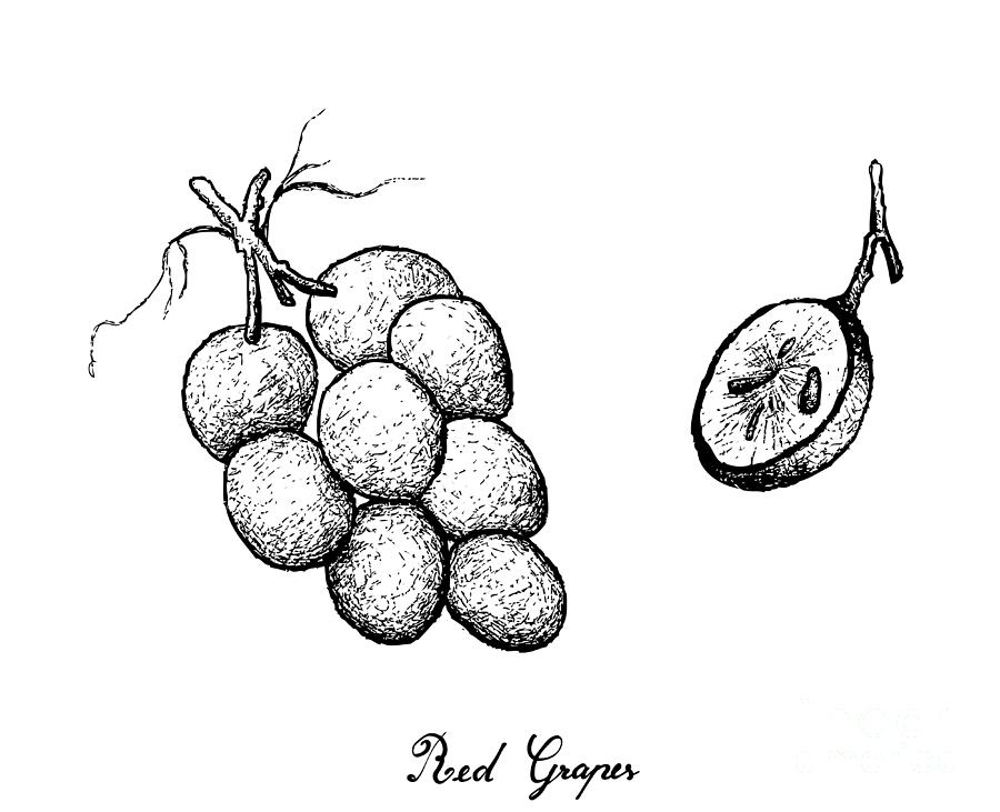 how to draw a grape how to draw grapes step by step tutorial easydrawingtips a draw grape how to