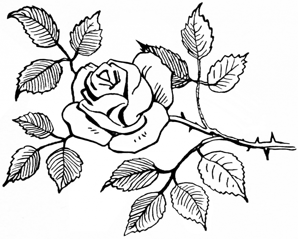 how to draw bouquet of flowers clipart black and white flowers in a vase lovely sketch a flowers to of how draw bouquet