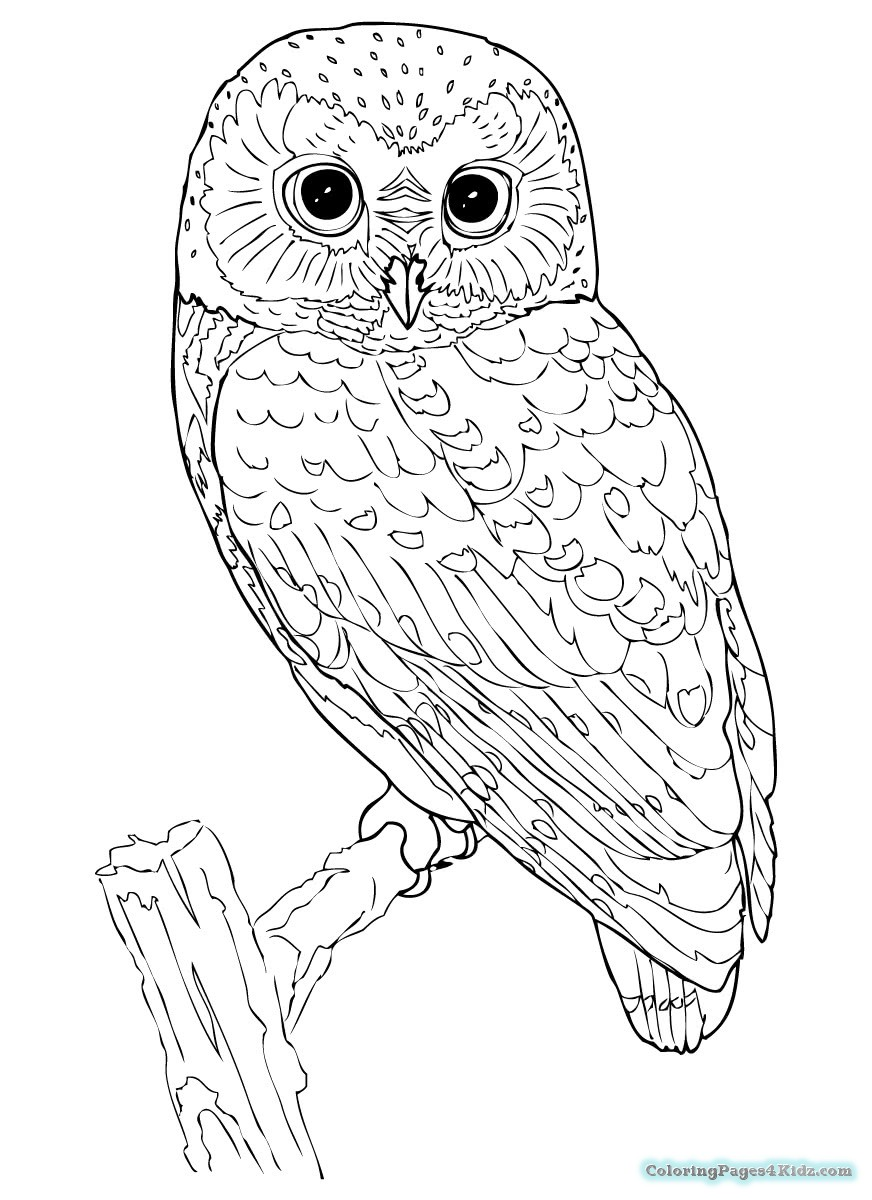 owl print out coloring pages printable owl template owl coloring pages and owl clipart pages print owl coloring out