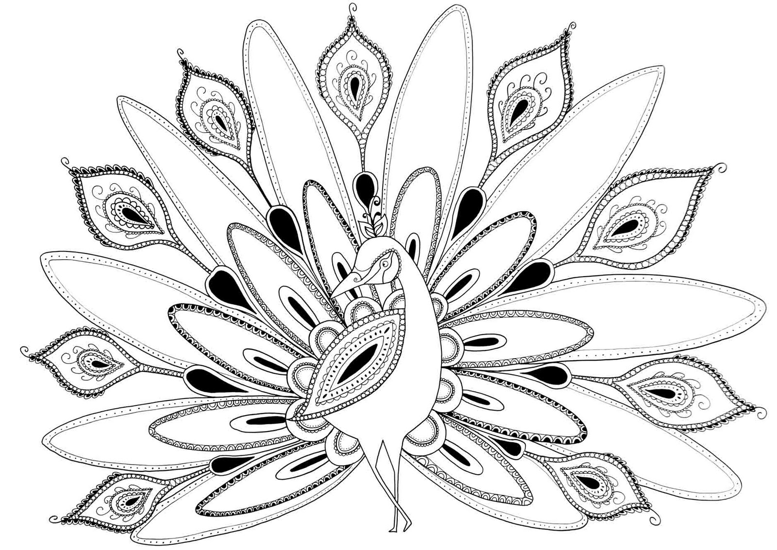 peacock pictures to color coloring page world peacock portrait peacock pictures to color