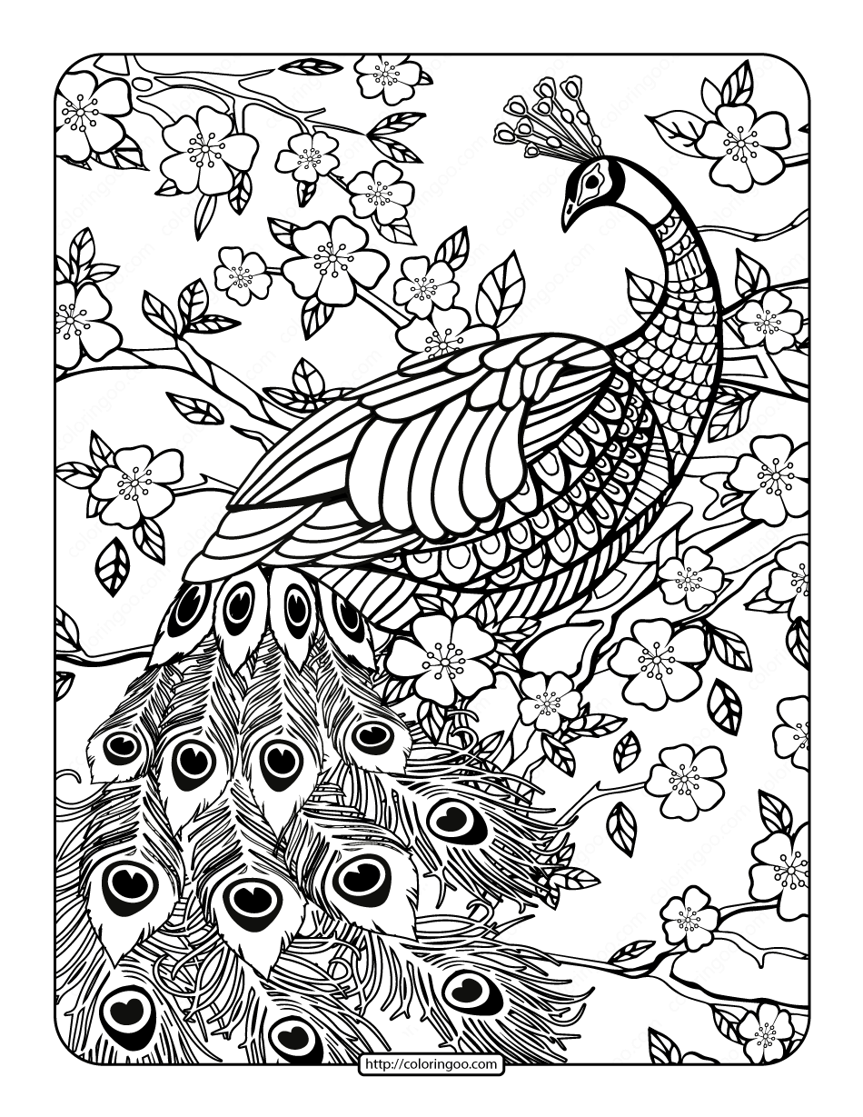 peacock pictures to color colours drawing wallpaper simple drawing of green peacock color to peacock pictures