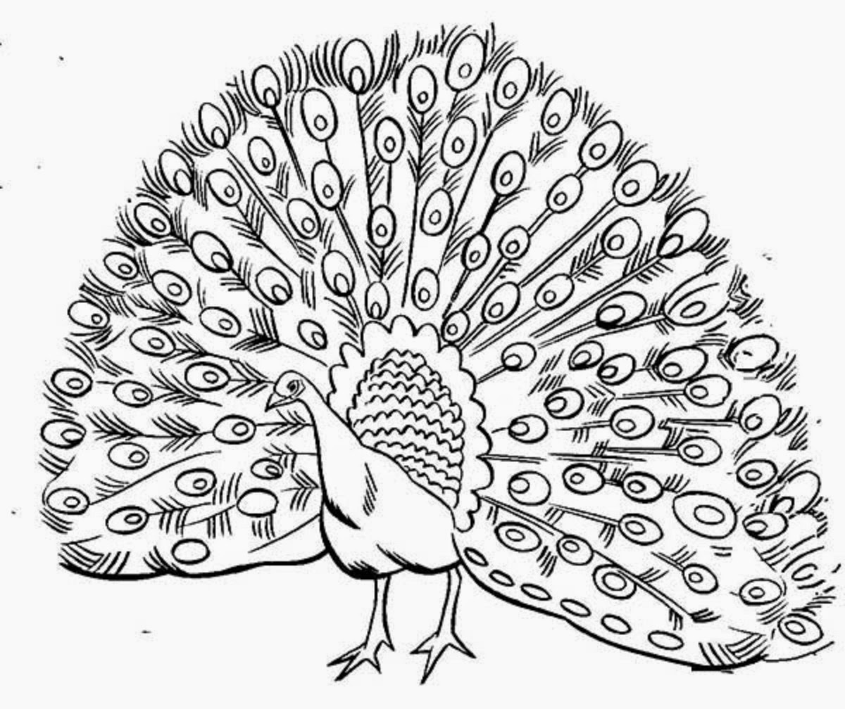 peacock pictures to color peacock coloring pages color to peacock pictures
