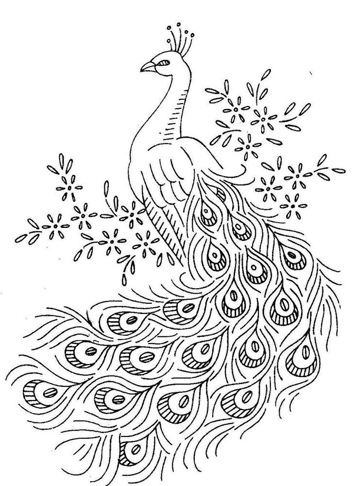 peacock pictures to color peacock coloring pages for kids peacock pictures to color