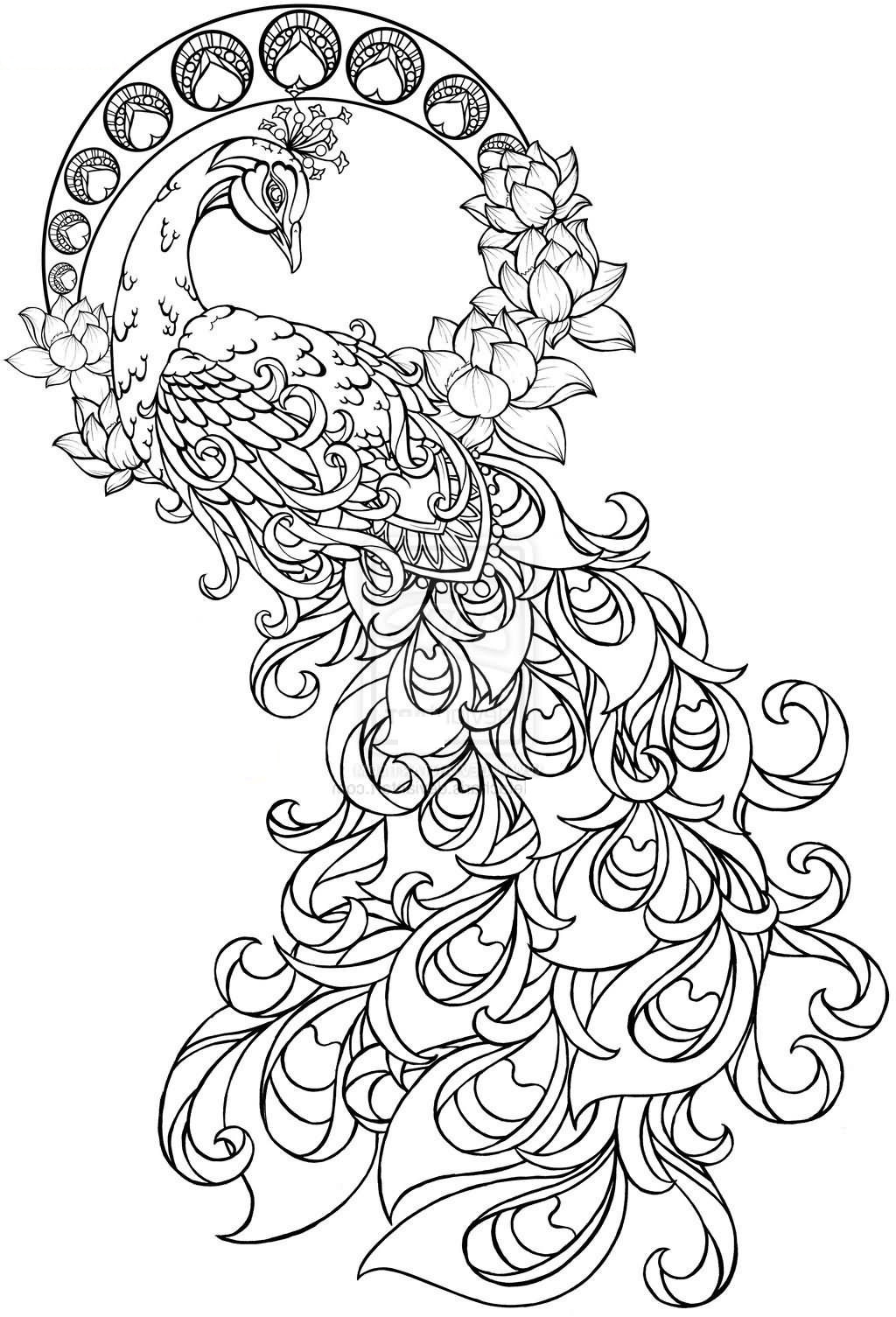 peacock pictures to color peacocks to color for kids peacocks kids coloring pages color pictures to peacock