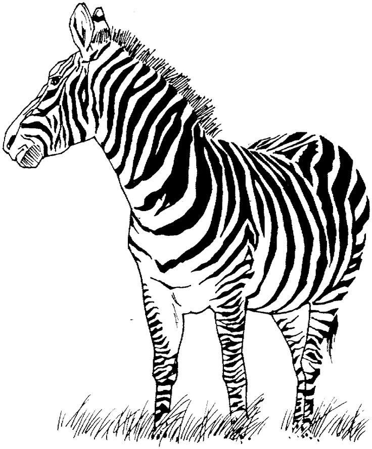 zebra face coloring page girl face coloring pages at getcoloringscom free face zebra page coloring