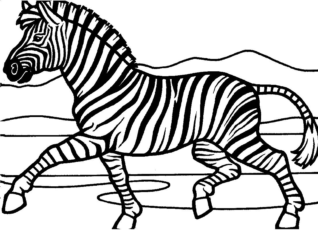 zebra face coloring page zebra coloring pages zebra coloring pages coloring zebra coloring page face