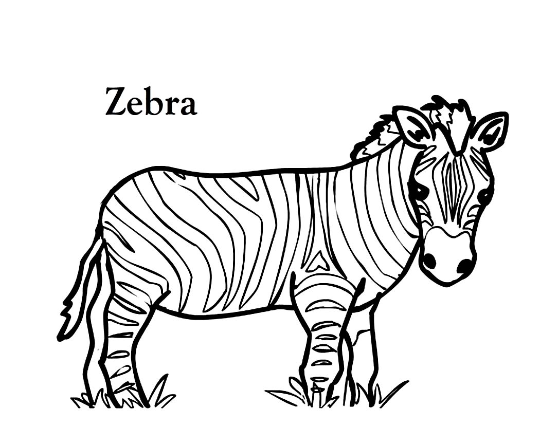 zebra face coloring page zebra line drawing at getdrawings free download zebra face page coloring